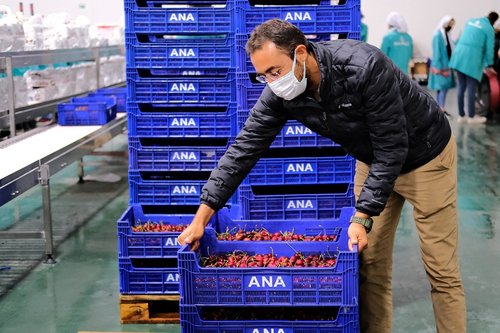 Demand for Turkish cherries was good at the beginning and middle of the season