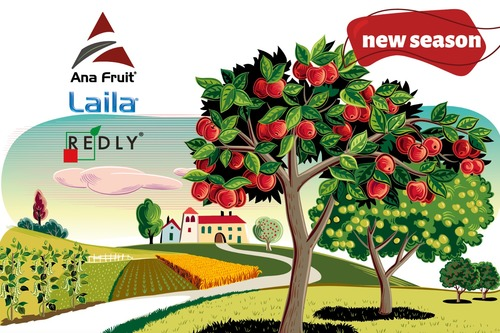 Lower volumes, but good quality for Turkish apples